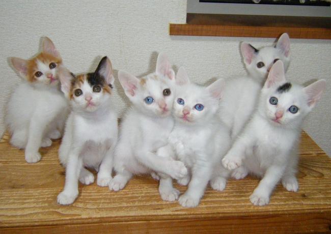 Kittens0930-1.jpg