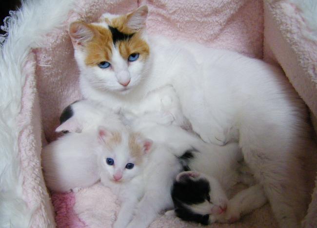 Gutchi-Kittens1212.jpg