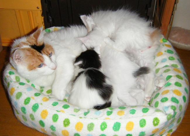 Gutchi-kittens1228.jpg