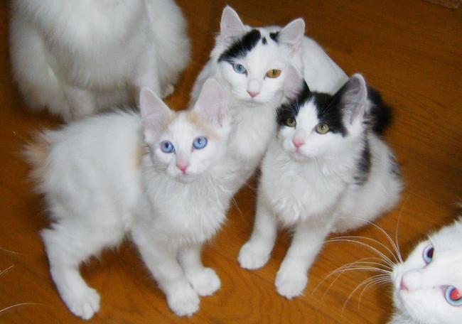 Kittens0206.jpg