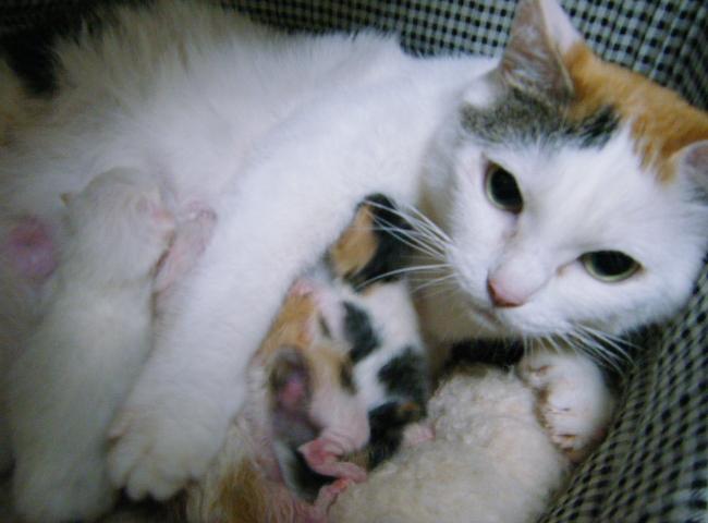 Akari-Kittens0401.jpg