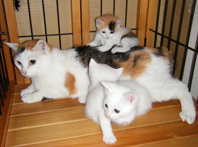 Akari-kittens0503-1.jpg