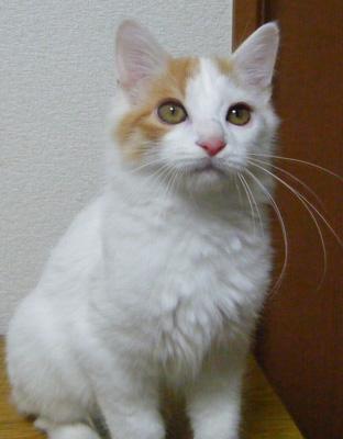 Ajiro1112.jpg