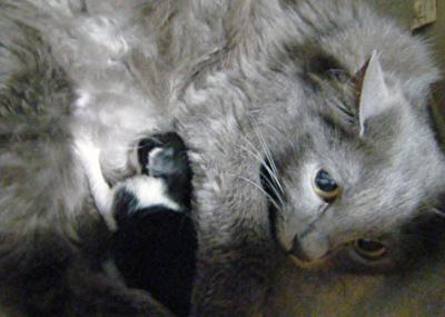 Azumi-Kitten0602.jpg