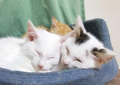 Kittens1220-1.jpg