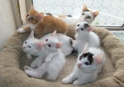 Kittens0616-1.jpg