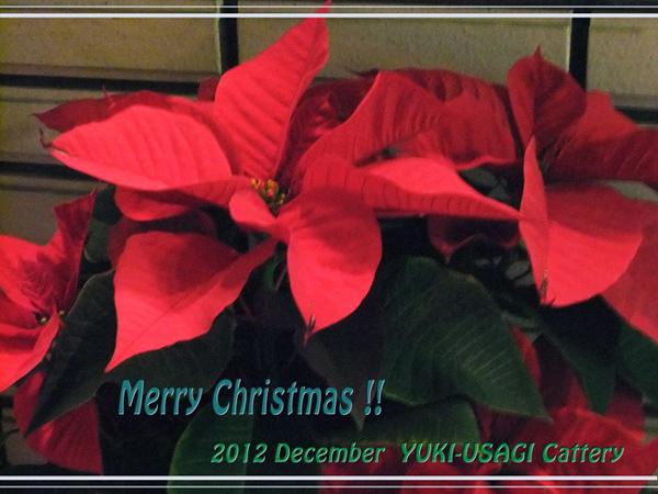 ChristmasCard2012.jpg