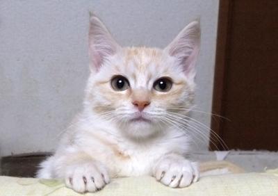 Hinata0118-1.jpg