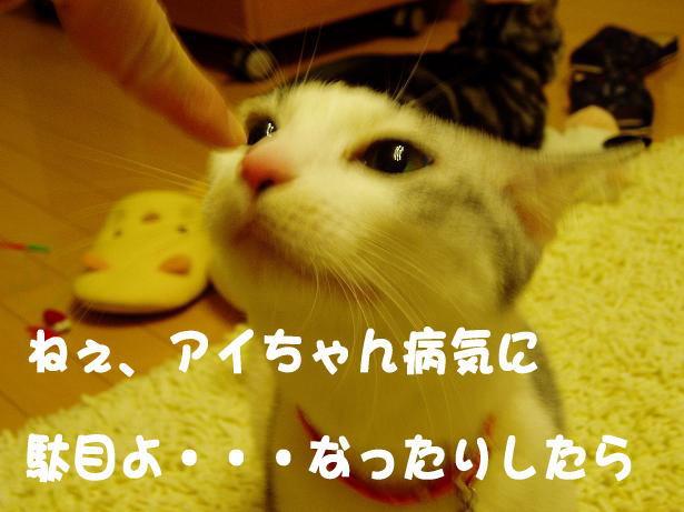 1233206810360319.jpg