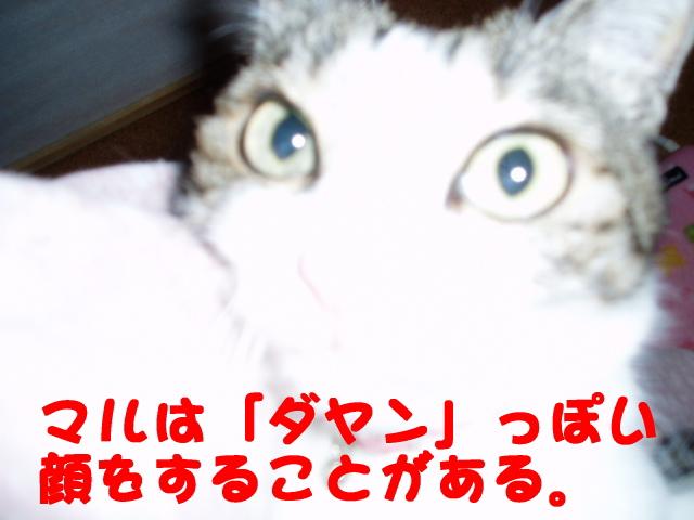 1268874964739570.jpg