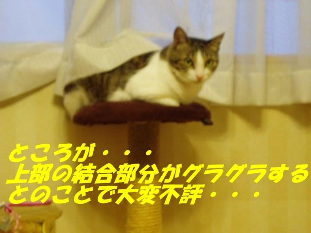 1349694613410398.jpg