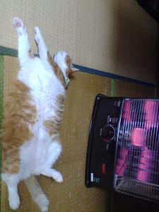 11_kenta4.jpg