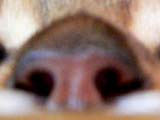 maroon_1.jpg