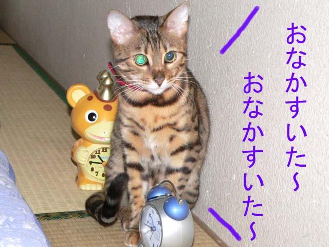 mezamashikurumi.jpg