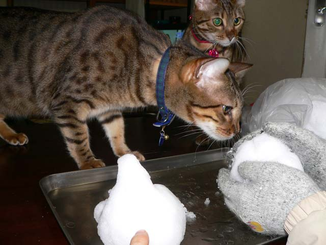 snowcat1.jpg