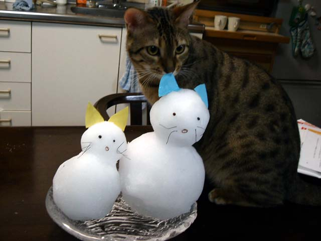 snowcat4.jpg