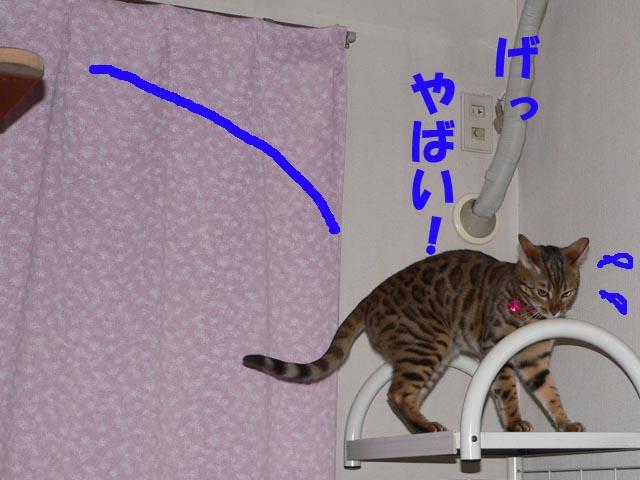 narukuru3.jpg
