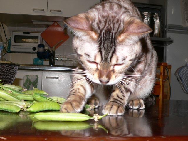 green peas1.jpg