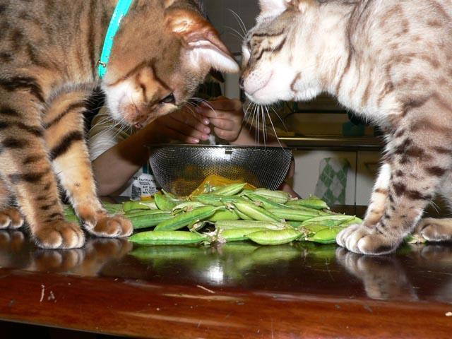 green peas3.jpg