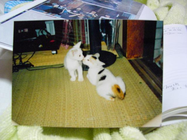 過去の写真.レイ.001.jpg