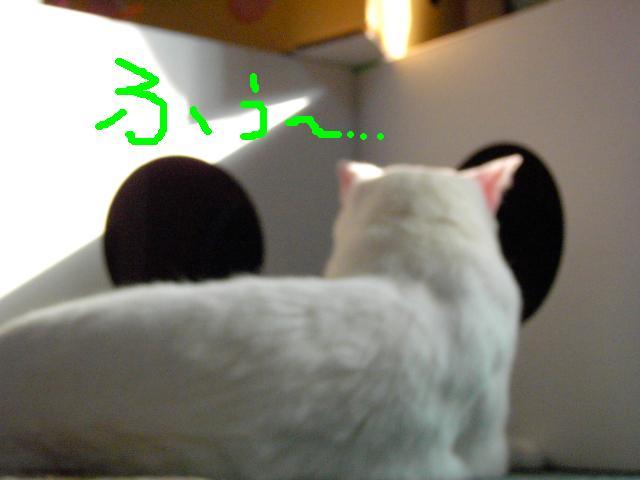 20050827.neru.006.jpg