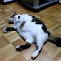 20060102.武蔵.002.jpg