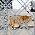 20060316.hounancat.02.jpg