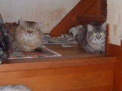 80匹猫.005.jpg