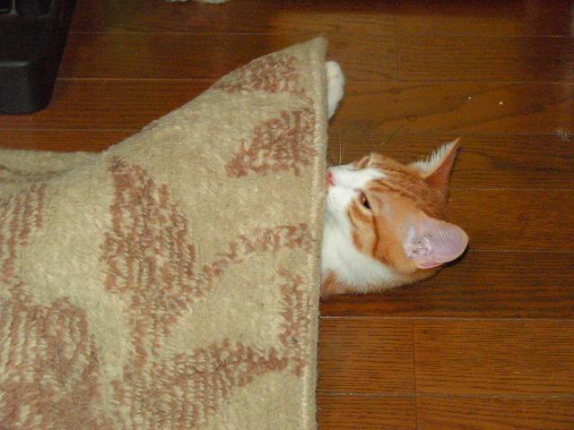 20060818.絨毯と景虎.002.jpg