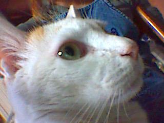 20070527.toto.003.jpg