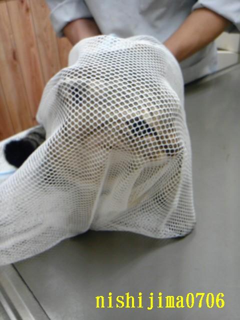 20110522.獣医さんでの猫.001.jpg