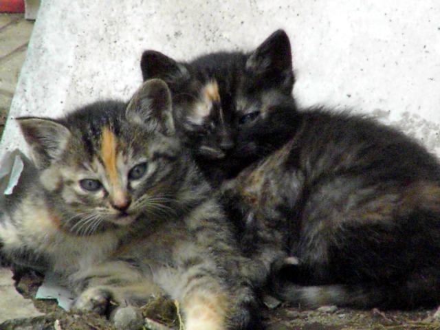 兄弟猫写真�.jpg
