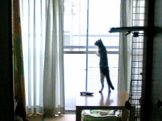 お外が見たいの@ひまわり.jpg