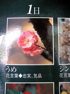 誕生花言葉@茶太郎&ひまわり.jpg