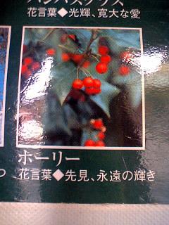 誕生花言葉.jpg