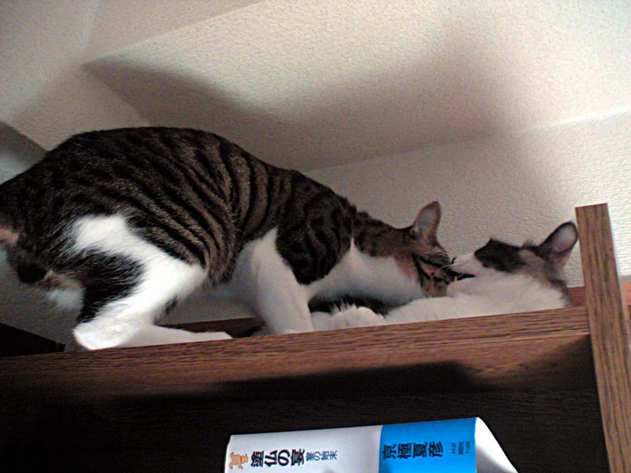 本棚の上で�.jpg