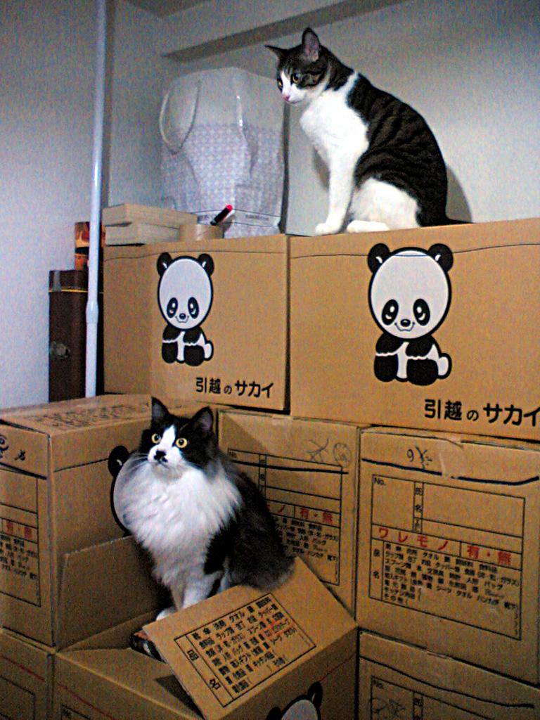 荷造りラストスパート!.jpg