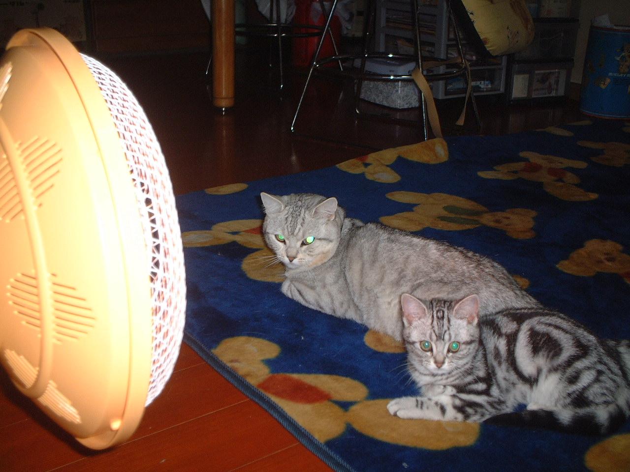 猫に大判(=^▽^=)小判