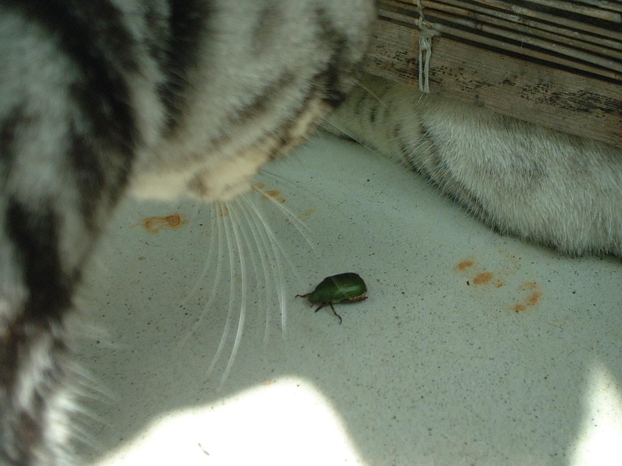 コガネムシと仲良し