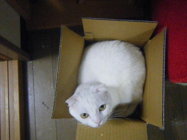 この箱はですね