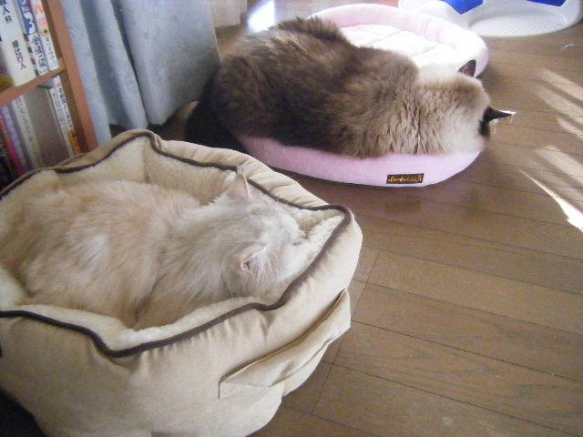 銀:朝は眠いデスね